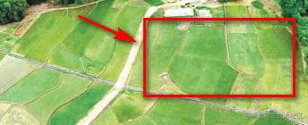 分隔不明显的田地